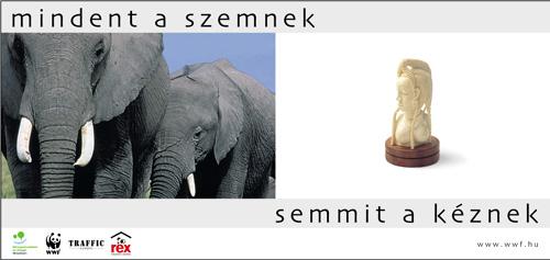 WWFHU_Elephant-4.jpg