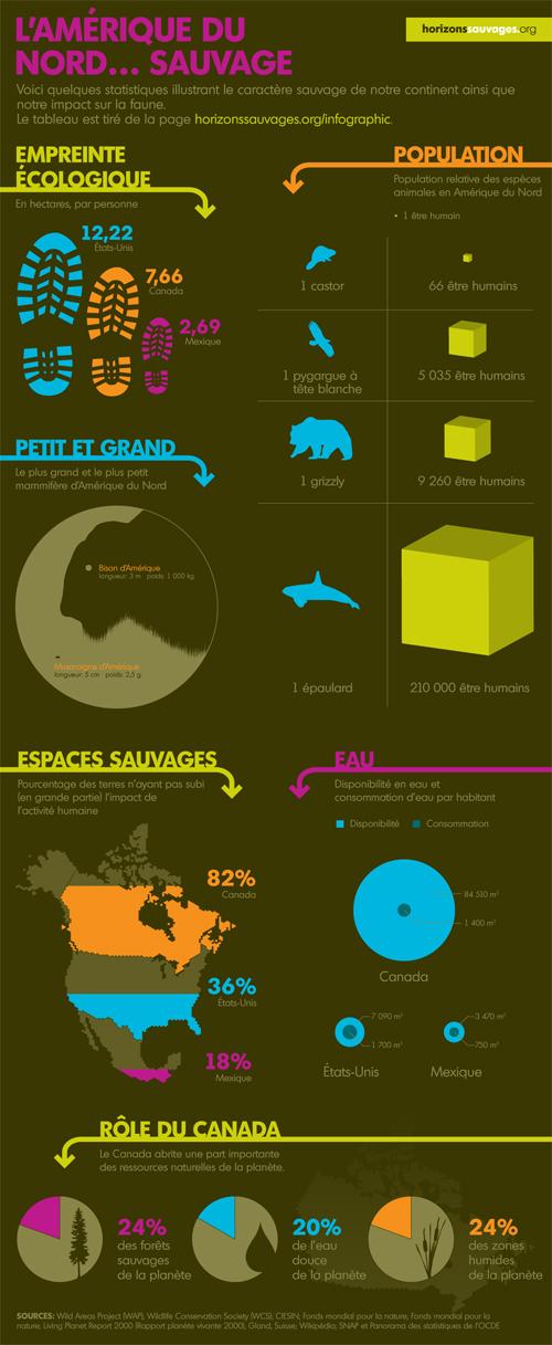 thebigwild_infographie.jpg