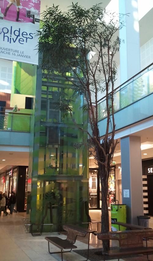 V2_arbre2.jpg