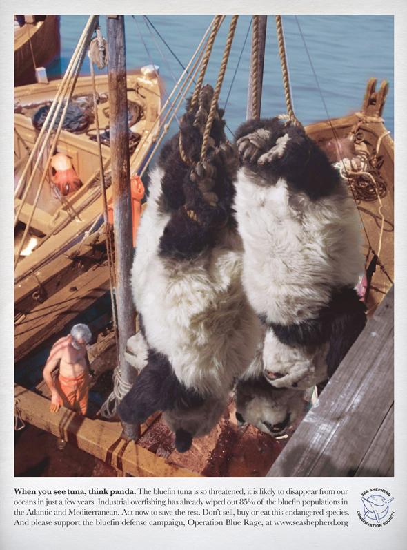 seashepherd-tuna2.jpg