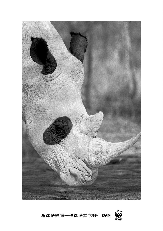 wwf_paint_rhino.jpg