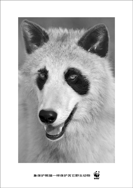 wwf_paint_wolf.jpg